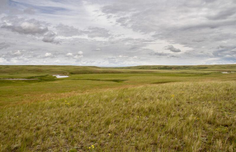 Milk River Ridge - ©C. Olson