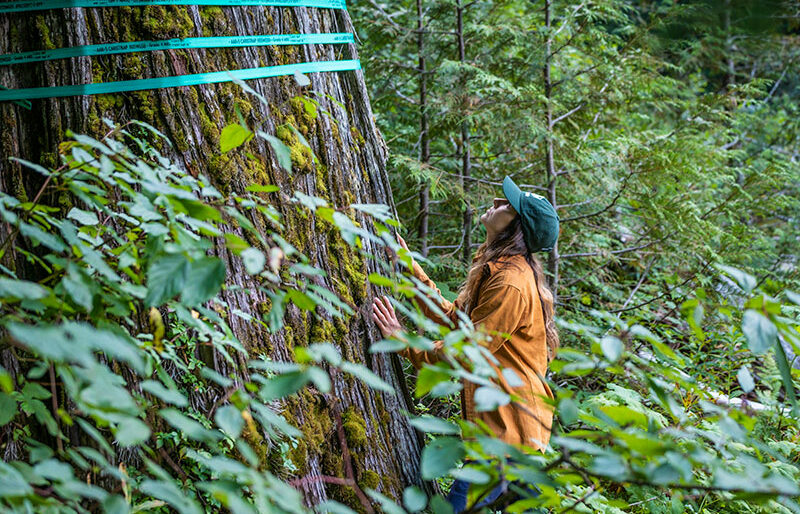 Campaigner Charlotte Dawe touching and looking up at a huge cedar tree with logging tape tied around it.