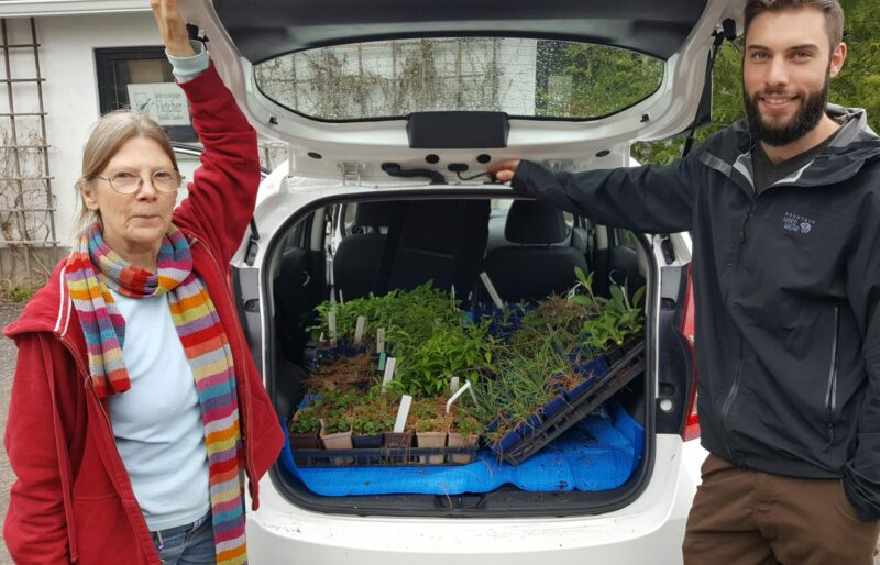 Two people standing next to a car filled with plants for native bees.