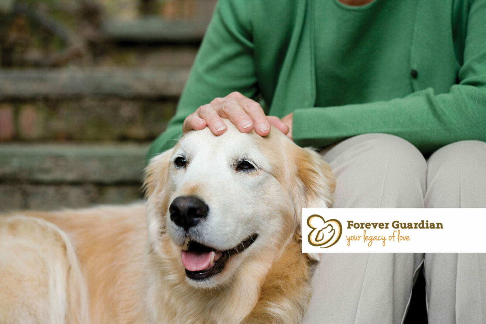 Seated women rests her hand on the head of the golden lab standing at her knee