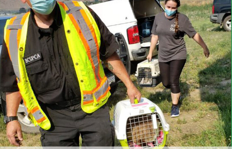Animal Protection Officer carries beloved cat rescued from Lytton