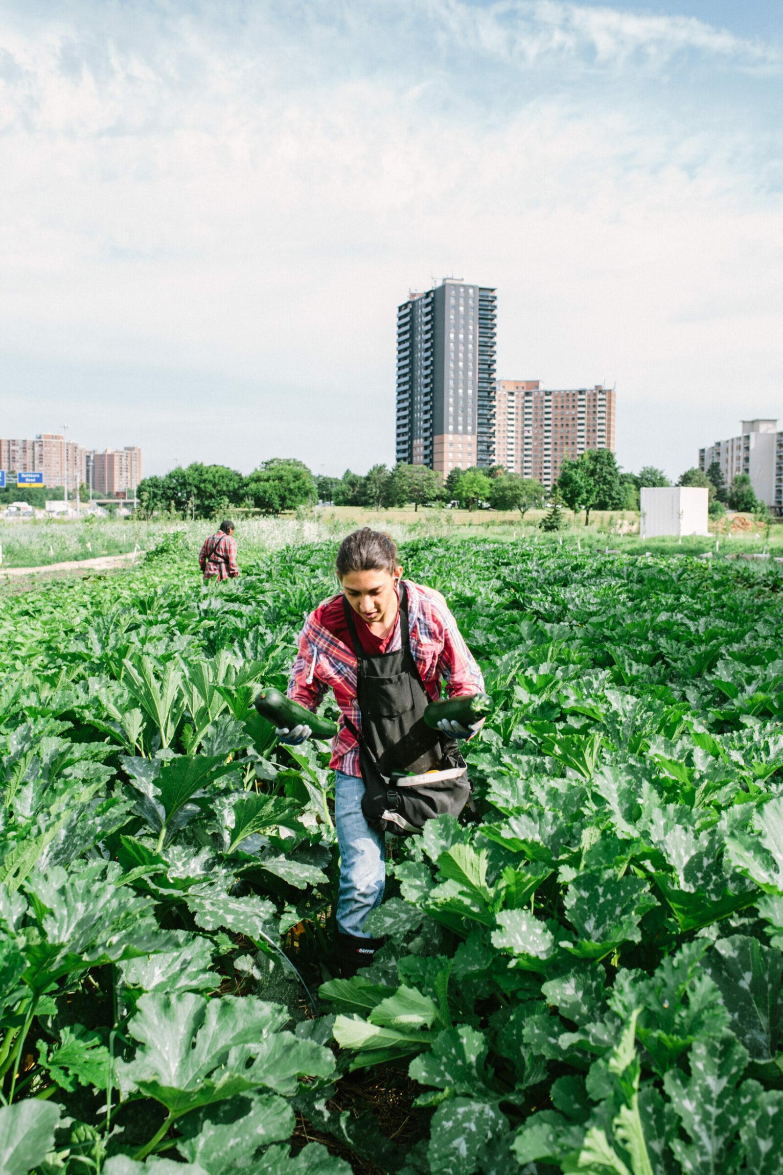 School Grown program at FoodShare Toronto